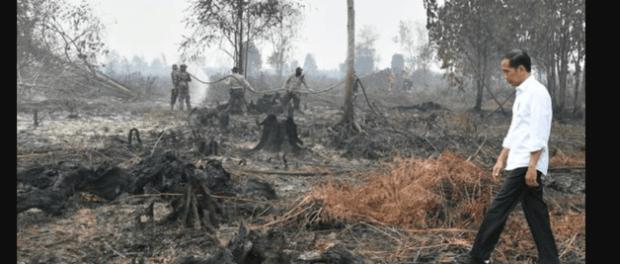 Jokowi tinjau kebakaran hutan di Riau