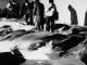 Dina Sulaeman: 'Salah Tembak' Iran Lebih Gentle Ketimbang Amerika