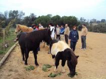 coaching amb cavalls