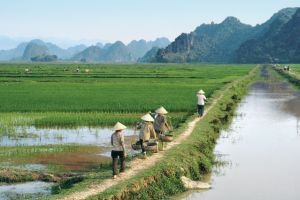 Vietnam, province de Ninh Binh, retour des champs le long d'un canal