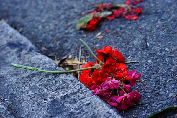 Flowers in gutter