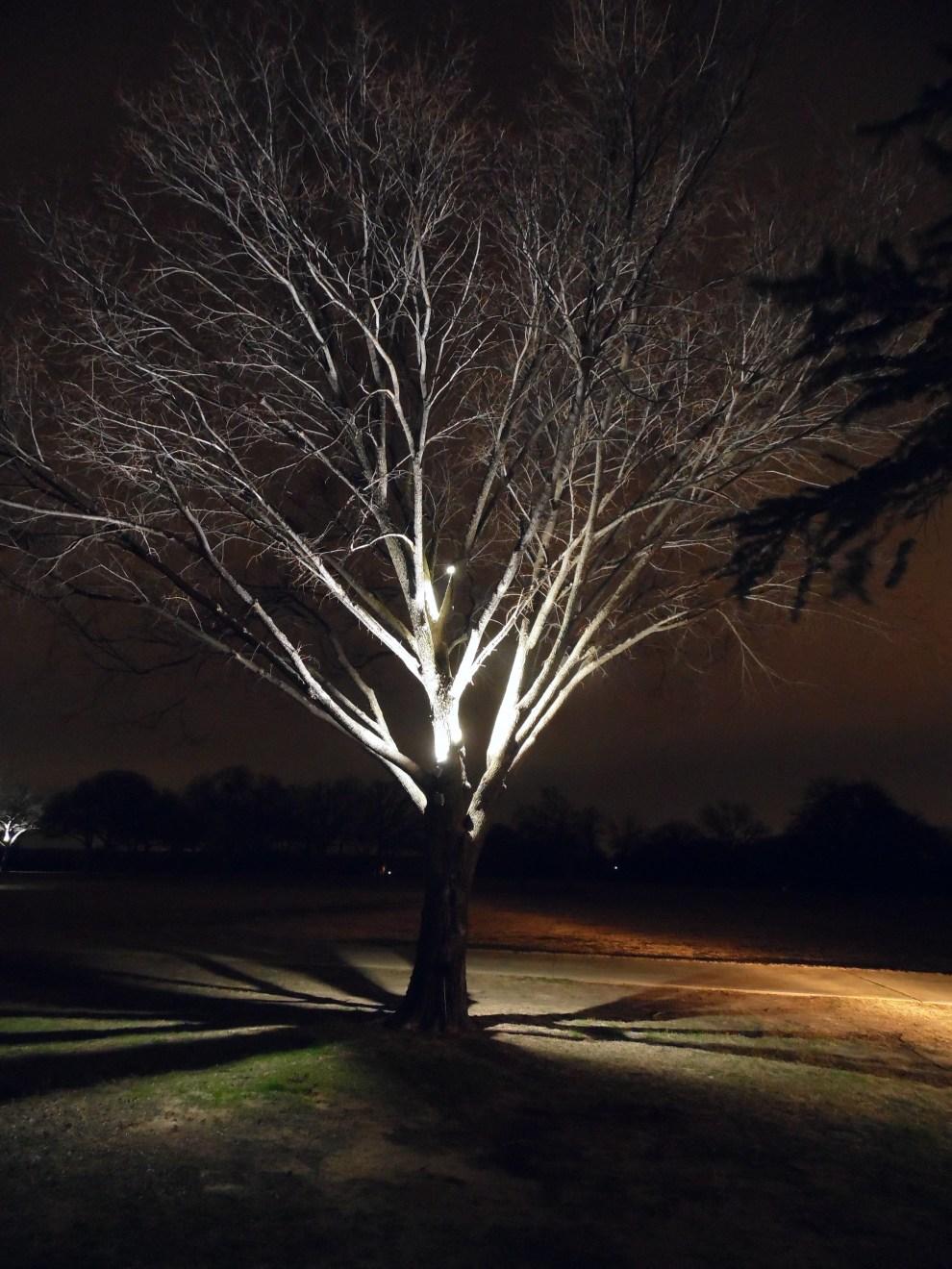 tree lighting TBN 4