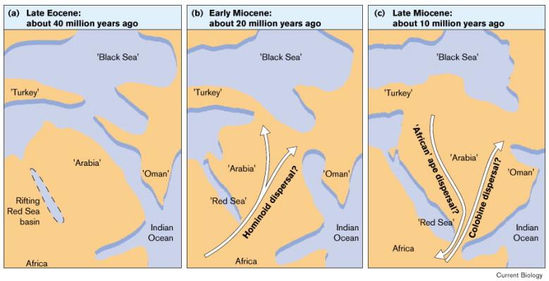 Resultado de imagen de dryopithecus migration eurasia
