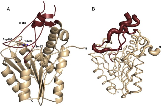 Image result for Monoacylglycerol Lipase structure
