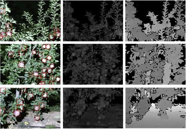 igura 4. Selección de 3 imágenes multimodales (RGB=color, S=reflectancia corregida y D=profundidad) y las correspondientes ubicaciones de los frutos (cuadros delimitadores rojos) (fuente)