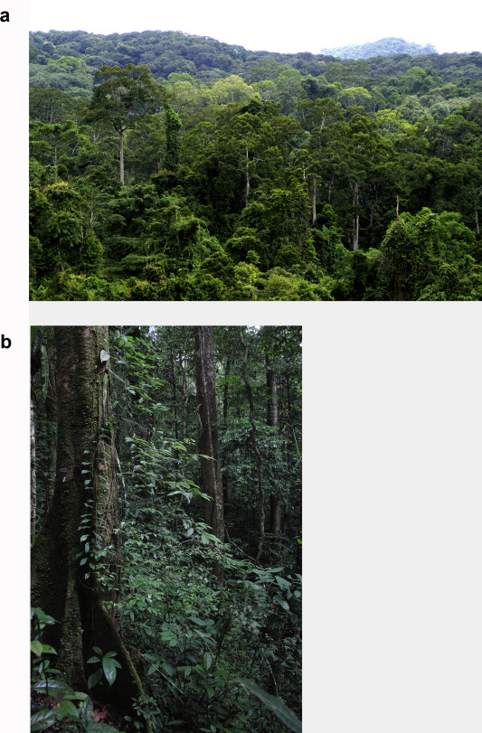 Evergreen forests are important for the protection and sustenance they provide for a wide variety of species ranging from birds to mammals. The Tropical Subtropical Evergreen Forest Transition In East Asia An Exploration Sciencedirect