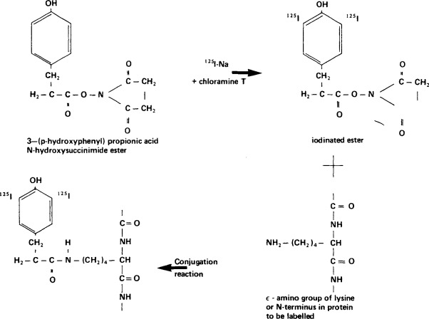chloramine has two primary advantages over chlorine, however: Chloramine T An Overview Sciencedirect Topics