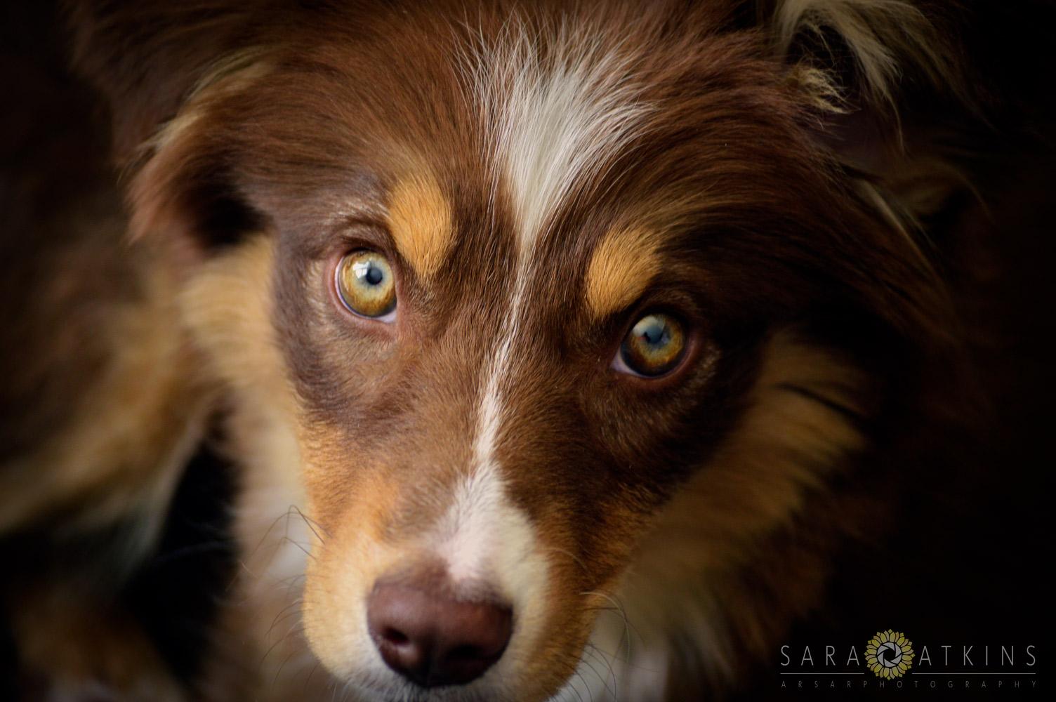 Sara Atkins-ARSAR Photography: Honey