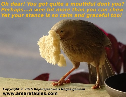 mouthfulbird