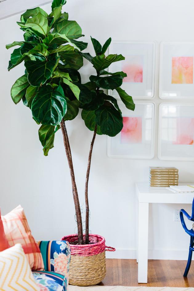 5 Pretty Houseplants that Improve Air Quality
