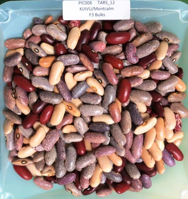pdf phaseolus bean improvement in tanzania 19592005 - HD1014×1072