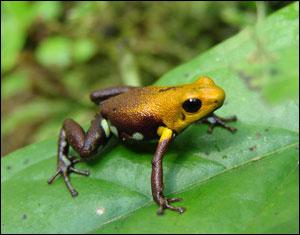 272008 Amfibianlar (Çift Yaşamlılar) Hakkında Detaylı Bilgi