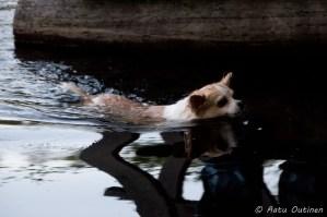 Kenraali Pancho uimassa.