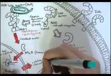 Immunology Innate Immunity