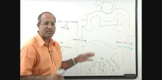Respiration - Physiology of Respiratory System 1