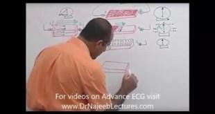 ECG - EKG Interpretation
