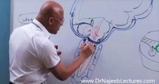 Syringomyelia - Symptoms, Diagnosis and Management