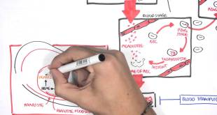 Pharmacology - Malaria (Antimalarials)