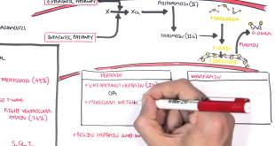 Pulmonary Embolism PART II