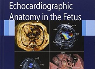 Echocardiographic Anatomy in the Fetus 1st Edition PDF