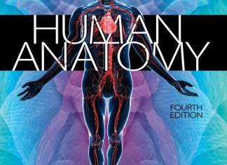 Saladin Human Anatomy 4th Edition PDF
