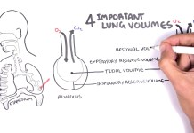 Lung Function - Lung Volumes and Capacities