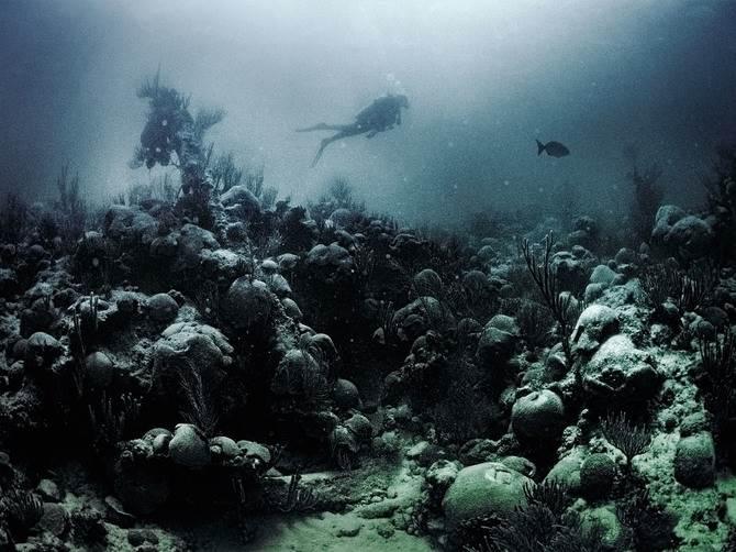 Подводный фотограф Джулиан Калверли