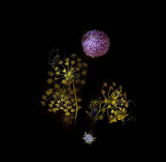 Фейерверк цветов. Сара Илленберг.