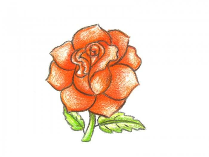 Cara Menggambar Mawar Dengan Pensil Selangkah Demi Selangkah Cara Sederhana Yang Akan Mengungkapkan Rahasia Cara Menggambar Bunga Mawar