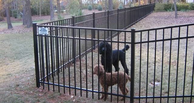 Protect Dogs Fence