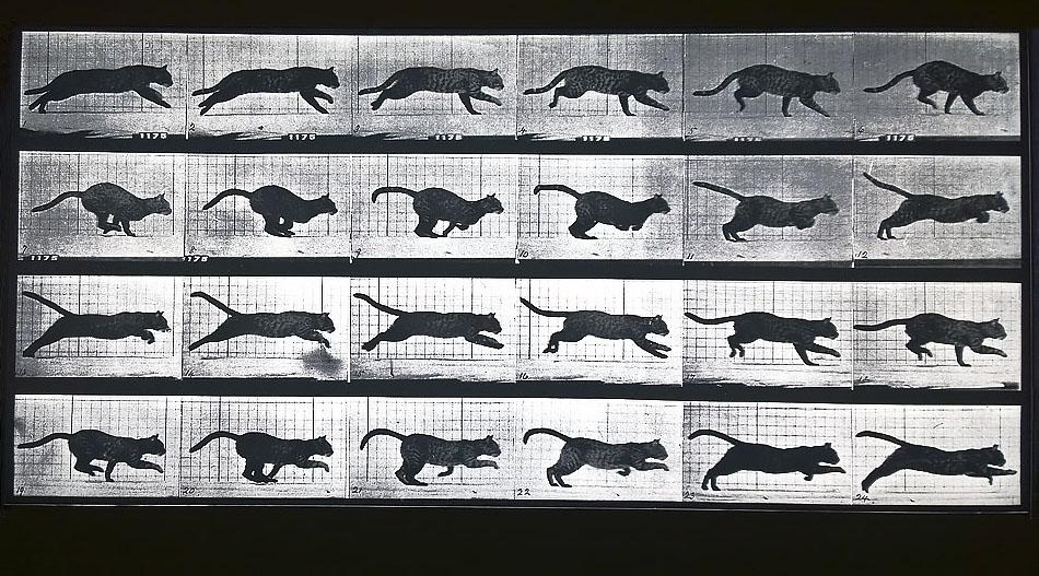 movimenti del gatto_EV