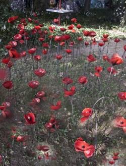 Arrosoir et persil Art et poesie du Jardin