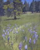 Camas Bloom, oil painting by Jean Mailander