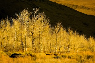 Colors of Autumn, September 2019 members show - Tree Line, image by Vivian McAleavey