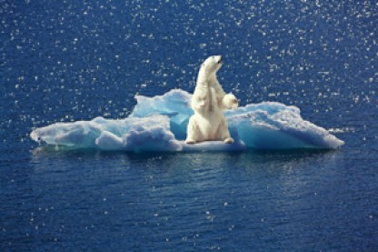 art stock charts nature iceberg polar bear