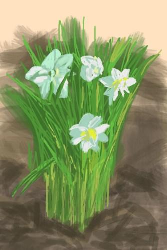 Narcissus-1280