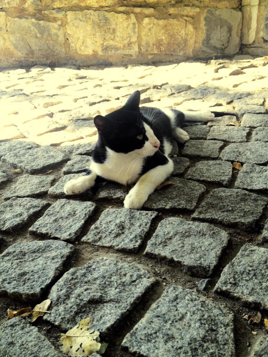 伊斯坦堡街頭的貓2 - 小檔