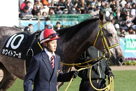 ホワイトフーガ パドック(15/01/11・黒竹賞)