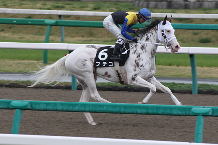 ブチコ 返し馬(15/04/05・伏竜ステークス)