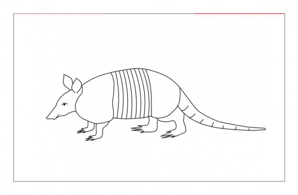 how to draw an armadillo # 51
