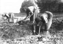 contadini-2-370x260