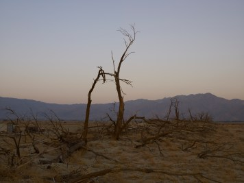 "Richard Misrach, ""Dead Trees, Anza Borrego Desert, California"", Marc Selwyn Fine Art; Image courtesy of the gallery"
