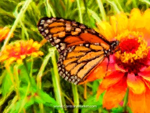 Beautiful bugs: monarch butterflies. Click through to purchase Monarch Butterflies gifts on Zazzle