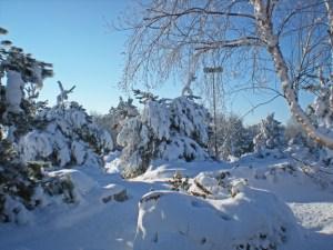 Winter Walk photo