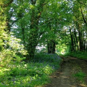 Irish paths