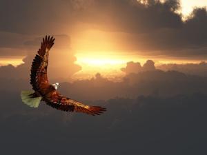Eagle Decor Gift Ideas