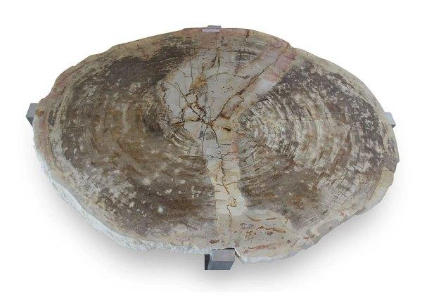 Union Rustic Hopkinton Petrified Wood Coffee Table