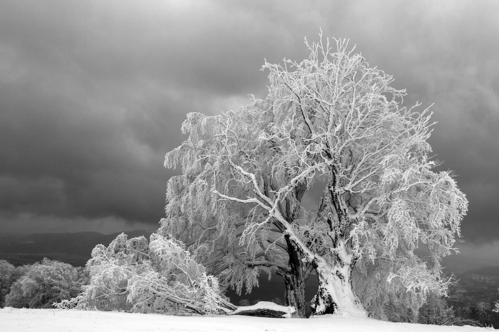 A Damaging Winter Storm Winter Scene