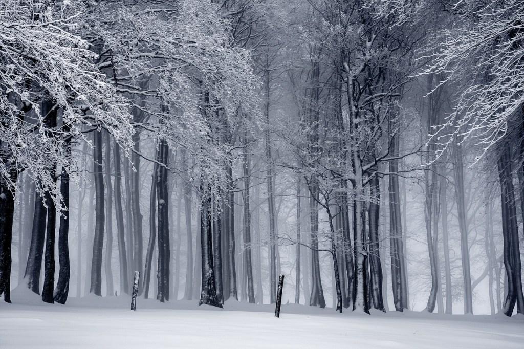 Black and White Frozen Forest Winter Scene