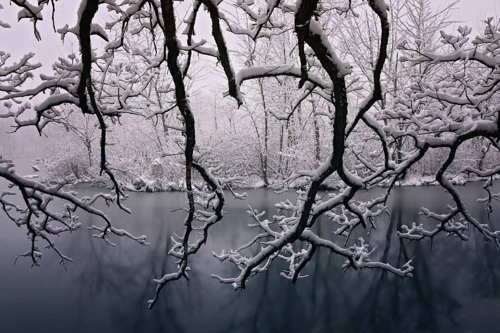 Snow Covered Branches Winter Scene